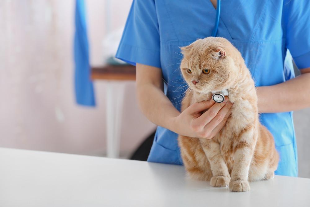 Veterinarian,Examining,Cute,Cat,In,Clinic